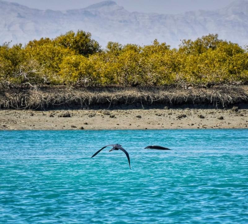 Остров Кешм, Иран