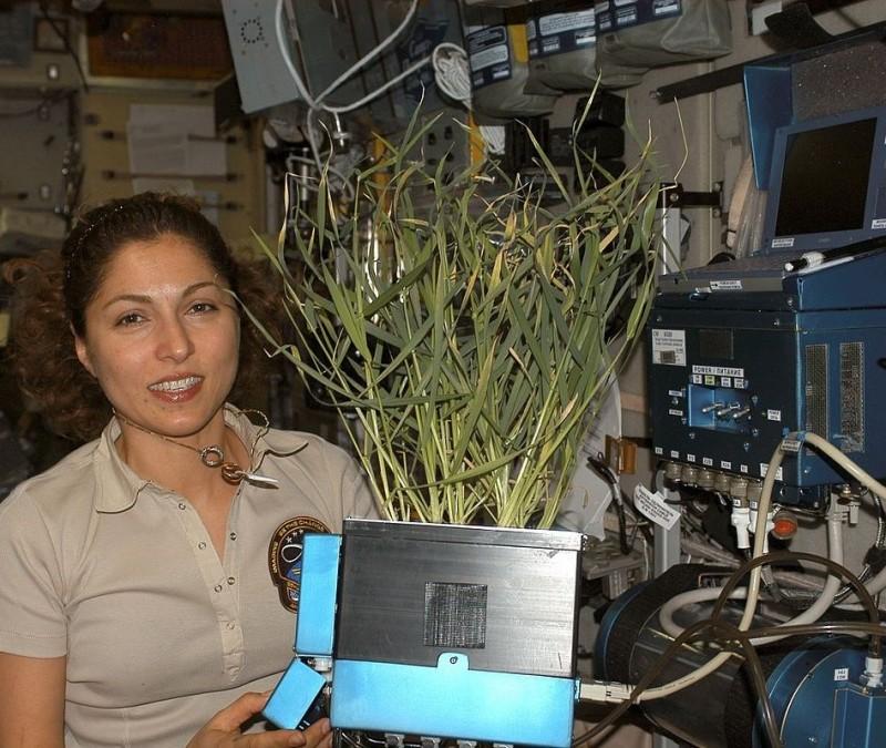 Ануше Ансари, Международная космическая станция