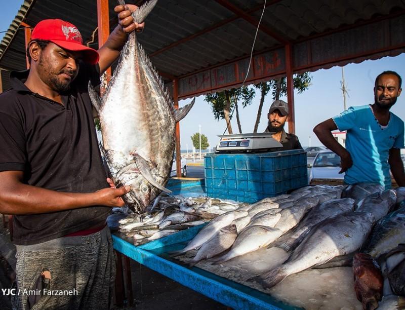 Рыбный базар в городе Бендер-Аббас, Иран