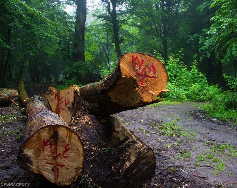 Вырубка лесов в Иране