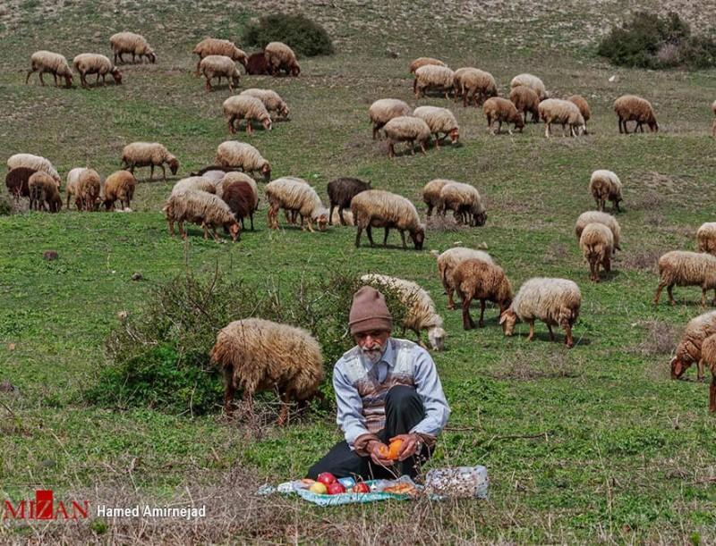 иран пастух